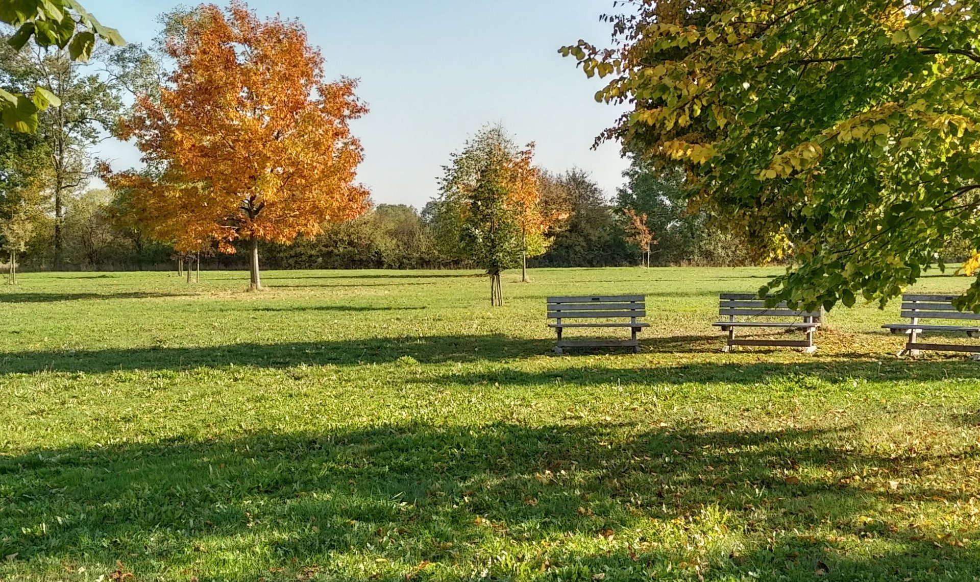 Rathaus_Startseite_Baumpark
